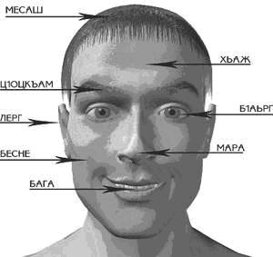 Голова - корта